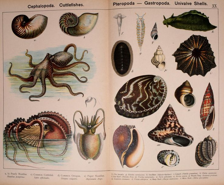 biodiversity of the animal kingdom Systems science: how biodiverse is your  animals biodiversity  there are perhaps as many as 35 different phyla within the animal kingdom alone but most are .