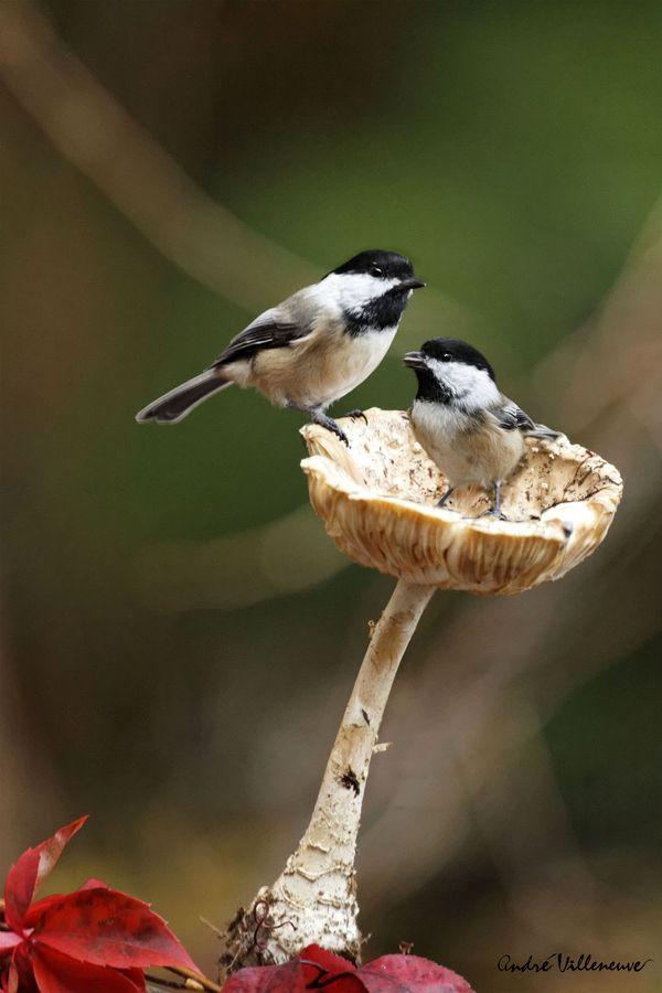 TINY birds on a mushroom cap