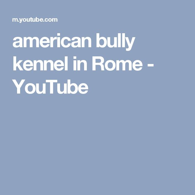 american bully kennel in Rome - YouTube