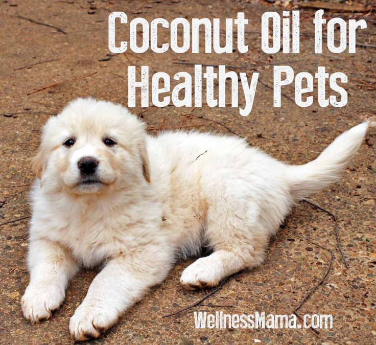 Benefits of Coconut Oil for Pets: A teaspoon of coconut oil per 10 pounds of dog, or you can give a table spoon per 30 pounds. Start with about 1/4 the recommended dosage and build up to the recommended level over 3-4 weeks, as sometimes flu-like symptoms can appear if you hurried it right away.""