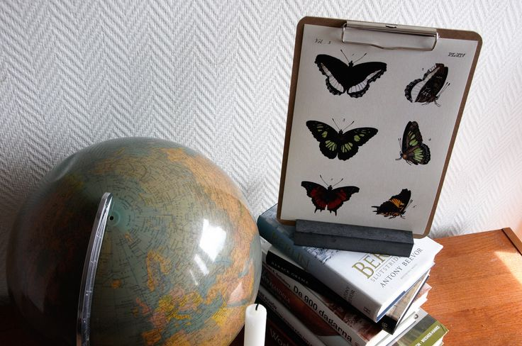 Butterflies on a pinborad, accompanied by a globe and a stack of books.