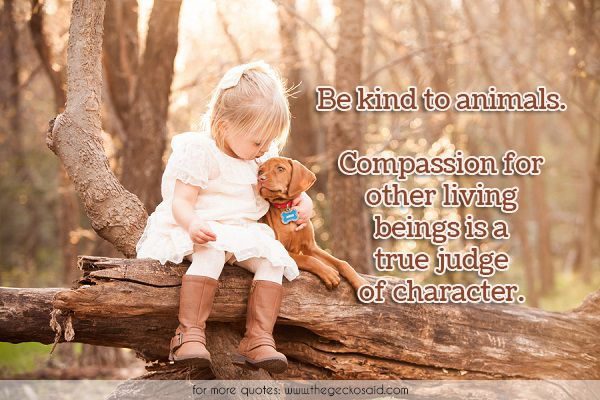 Be kind to animals. Compassion for other living beings is a true judge of character.  #animals #beings #character #compassion #judge #kind #other #true  ©2016 The Gecko Said – Beautiful Quotes