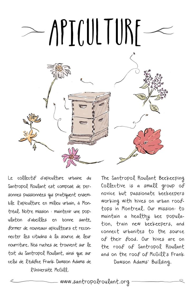 An illustrated look at Santropol Roulant's Apiculture program.