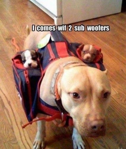 2 Sub Woofers! Priceless.,,I use to have the best Pitbull that ever lived..
