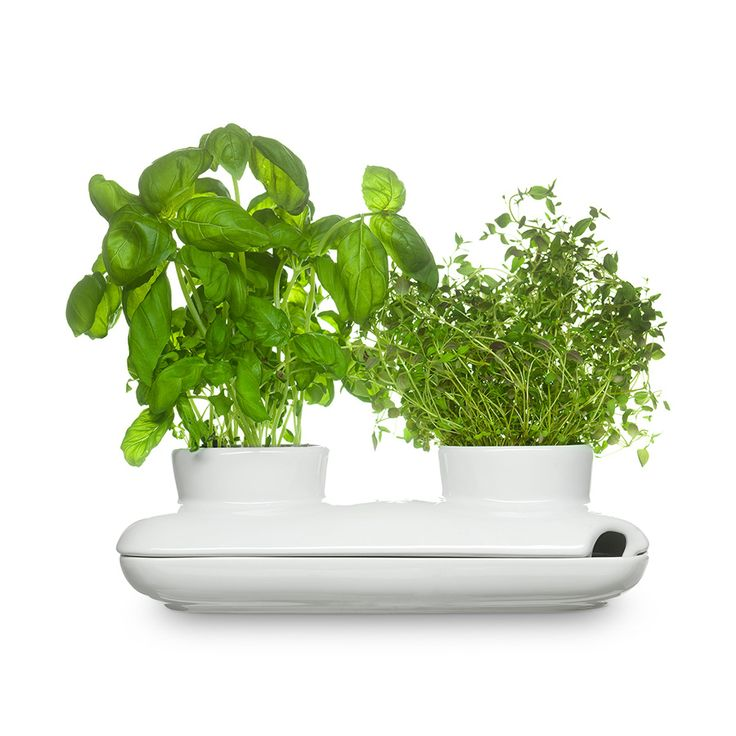 Kräutertopf herbs and spices Duo 27 x 13 cm weiß