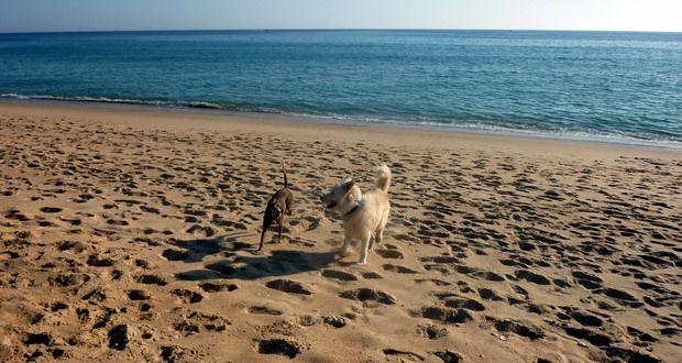 Urlaub mit Hund in der Algarve? An die meisten Strände kannst du deinen Hund mitnehmen. Erfahre in diesem Artikel mehr über den Hundestrand-Algarve!