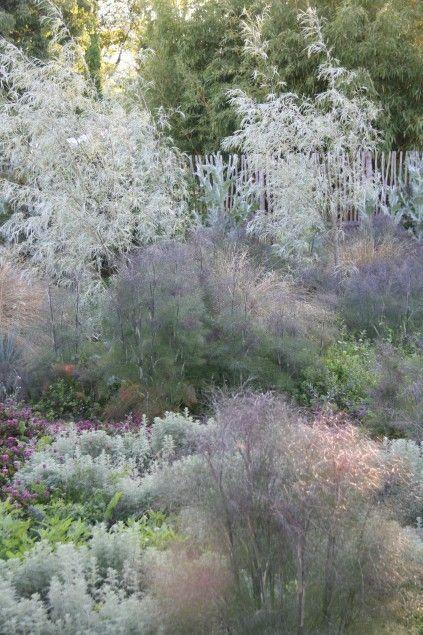 Foeniculum vulgare 'Giant Bronze', Salix exigua and Artemisia