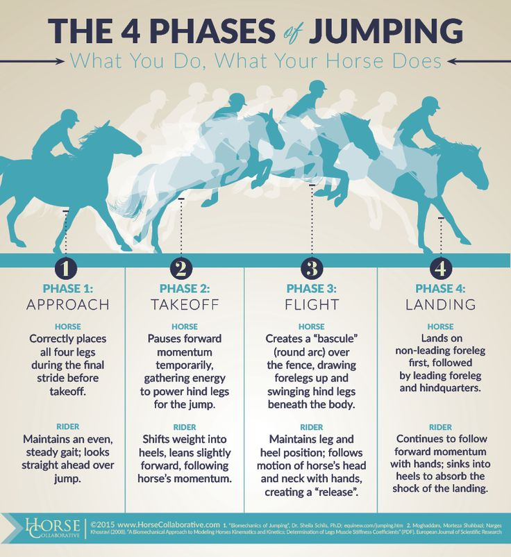 4 Phases of Jumping: What You Do, What Your Horse Does