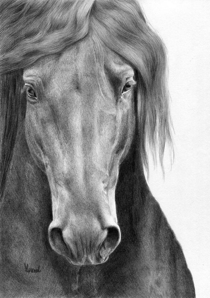 Portret zimnokrwistego konia wykonany ołowkiem.