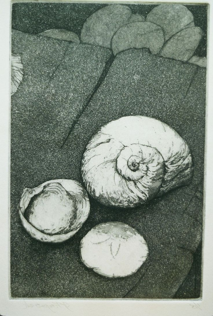 Original Fine Art eEtching 3 shells by papermaker on Etsy