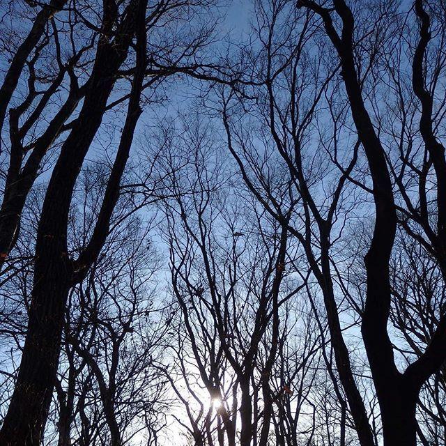 【shinobushinjo2】さんのInstagramの写真をピンしています。《木々を見上げながら林の中を歩くのが好きです。 木漏れ日を浴びながら。^_^ #林 #木々 #樹々 #木漏れ日 #小諸市 #小諸城 #懐古園 #長野県》