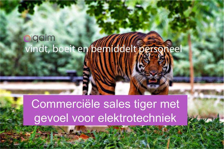 #vacature #utrecht Ben jij die commerciële sales tiger met gevoel… https://www.qalm.nl/vacatures/commercieel-medewerker-elektrotechniek/