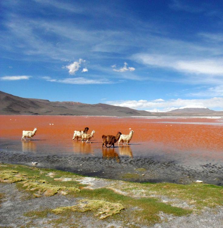 Red Lagoon, Uyuni, Bolivia #TravelTuesday