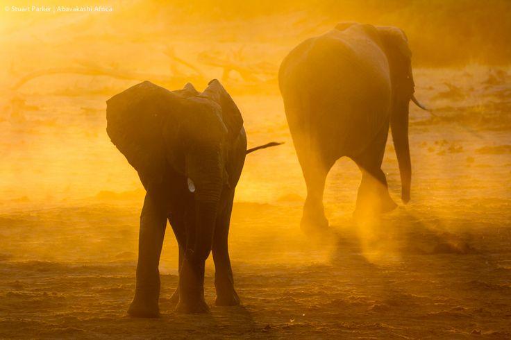 Sunset with the elephants of Savute Safari Lodge