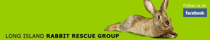 Long Island Rabbit Rescue Group banner