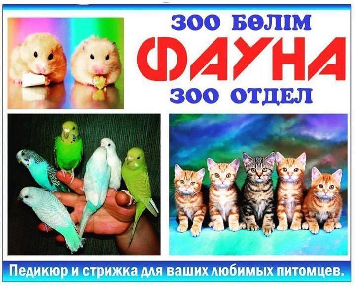 На педикюр и стрижку просьба звонить заранее по т. 4 49 89 . @neon_balkhash_mishanikitin13 #neon_balkhash_mishanikitin13 #педикюр #стрижка #фауна #Неон #Зооотдел  Balkhash Kazakhstan #ria4ayka #advertisingAgency #worldSoSmall  #SponsoredAdvertisements #4ayka #Балхаш #реклама #реклама6социальныхсетей ria4ayka - http://ift.tt/1HQJd81