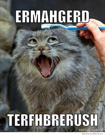 Brushy Brushy Cat Meme