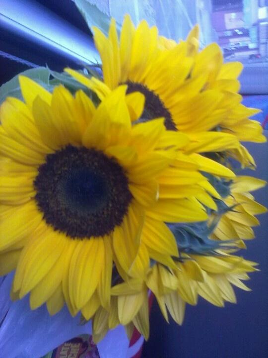 Flor tipo girasol