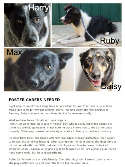 Foster Carers Needed Now In Sydney Now. Love Maggie's Rescue!