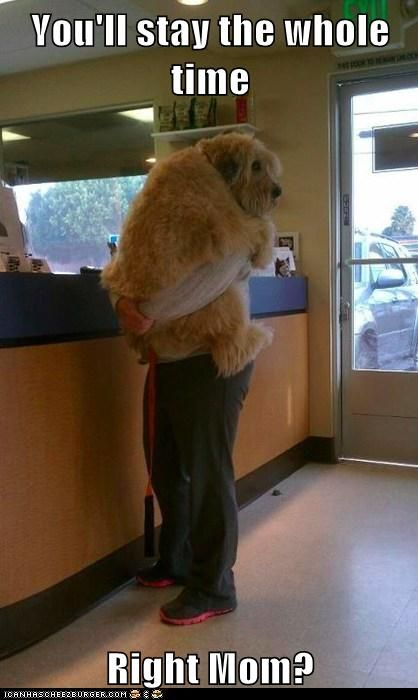 Dog at the vet funny quotes memes dog pets meme funny quotes