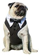 Providing bespoke dog harnesses for distinguished pugs and other dogs!