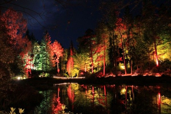 The Enchanted Forest, Scotland!