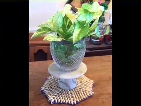 House Plant Golden Pothos In Water | Picture Set Of Indoor Outdoor Plants For Home Or Office – Indoor Plants Store