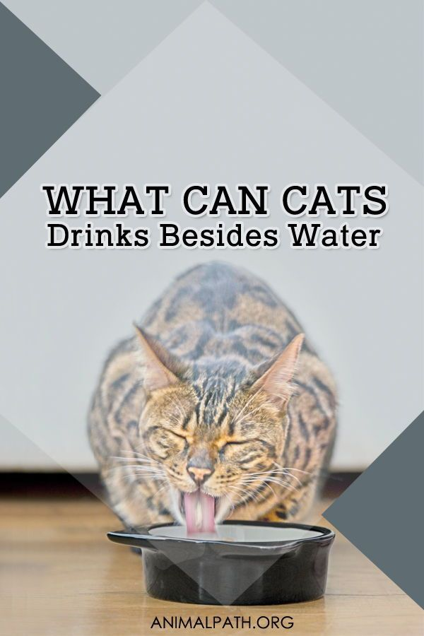 What Can Cats Drink Besides Water Cat Drinking Cats Kitten Formula