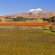 The vineyard looking east - Marlborough NZ - Vineyards where THE LOOP is from.