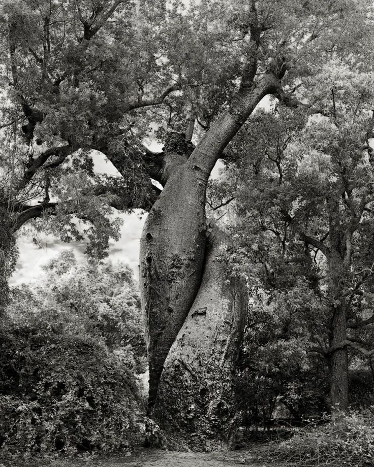 arboles-antiguos-beth-moon1