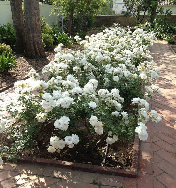 Aprille's SoCal Gardening ✿❀✾: April 2013