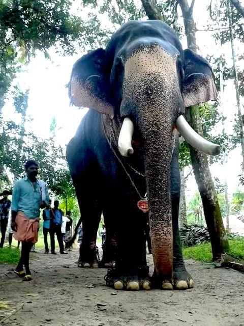 Puthupally Keshavan hd photos | Elephant, Elephant images ...