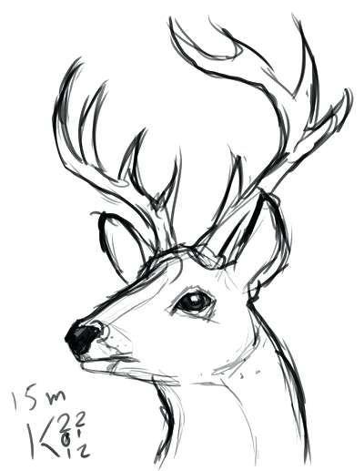 deer easy draw drawings head animal sketches cool