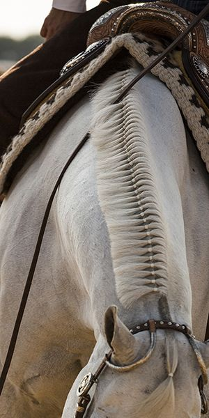 DETAIL_WESTERN_BANDS_BANDING_GREY_APPALOOSA_SADDLE - Perfect Bands on A grey mane