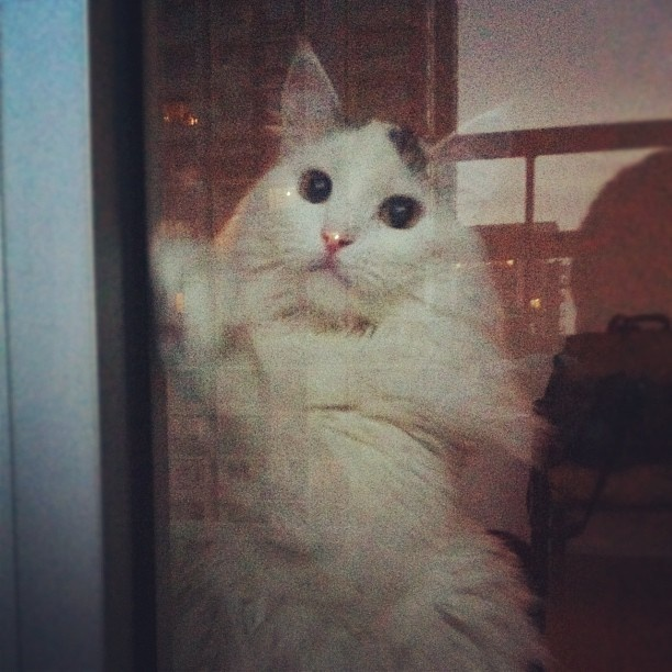 #cat #gato #hoy