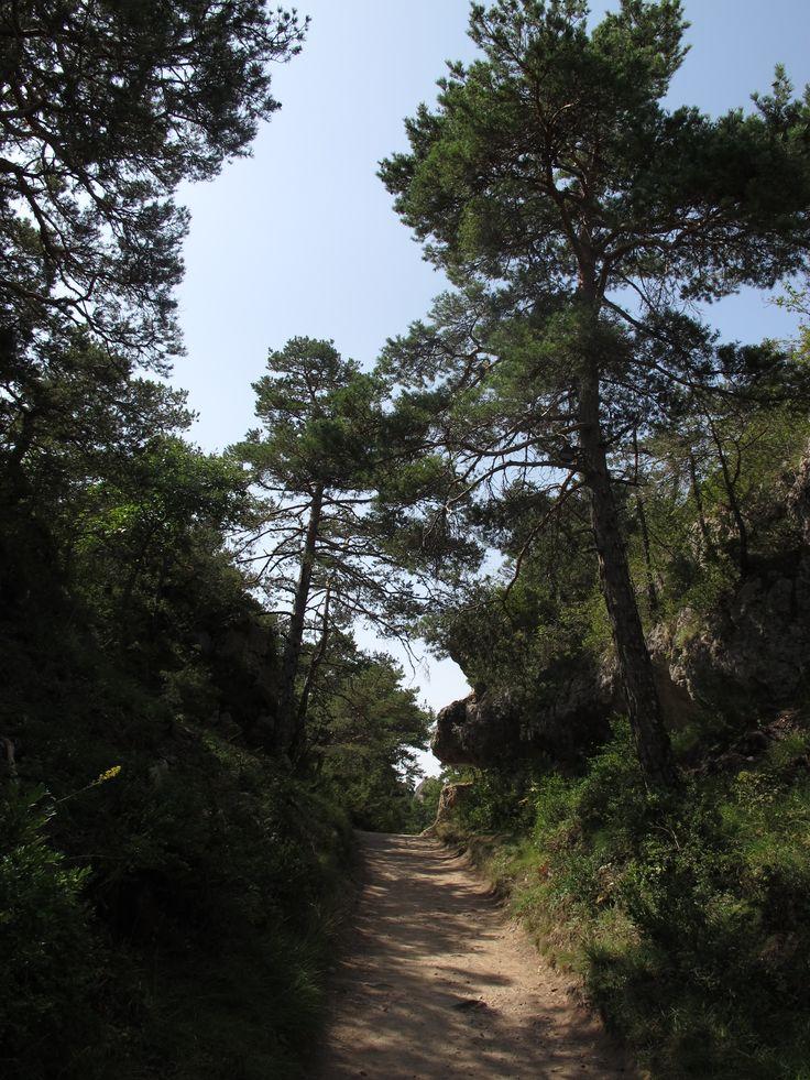 Après escapade dans le sentier ombragé entre pin sylvestre et chêne pour admirer le chaos,  le petit groupe repart direction Camprieu  puis  l'Espérou et l'Aigoual. #causses #cevennes #unesco