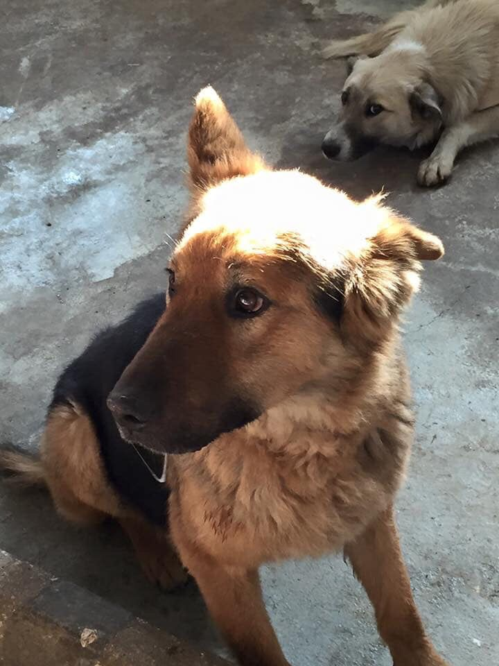Pin By Harmony Fund On Romania Animal Rescue