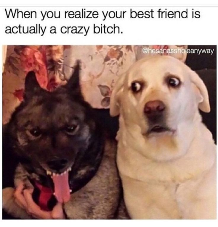 Image result for best friend is a complete psycho