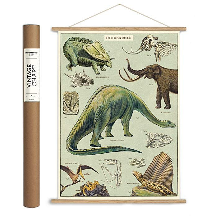 Cavallini Papers Co Inc Cavallini Vintage Dinosaurs Hanging Poster Kit Multicolor Hanging Posters Art Poster Prints