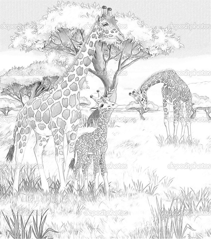 Mom And Baby Giraffe Coloring Pages Safari – giraffes – coloring ...