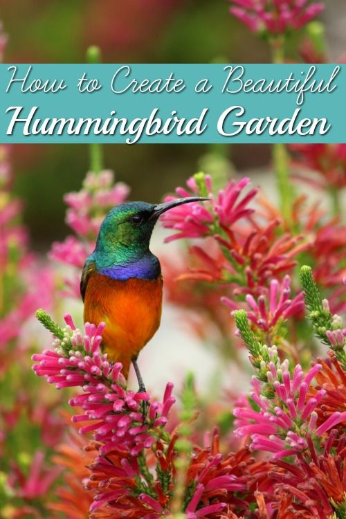Don't you love seeing hummingbirds in your garden? I do! There are several ways to attract more hummingbirds that are as simple as adding a few beautiful flowers to your garden. Check out this list!