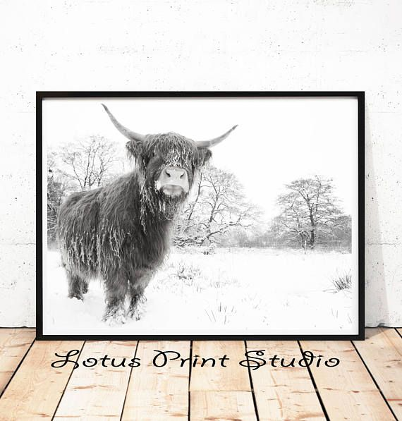 Highland Cow Print Animal Wall Art Winter Poster Kids Room
