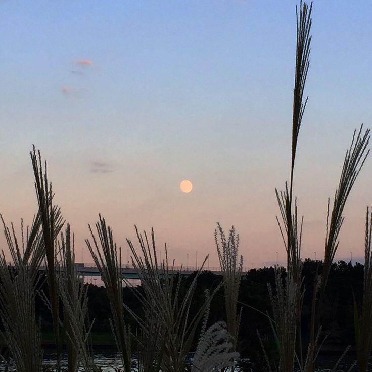秋の夕月。