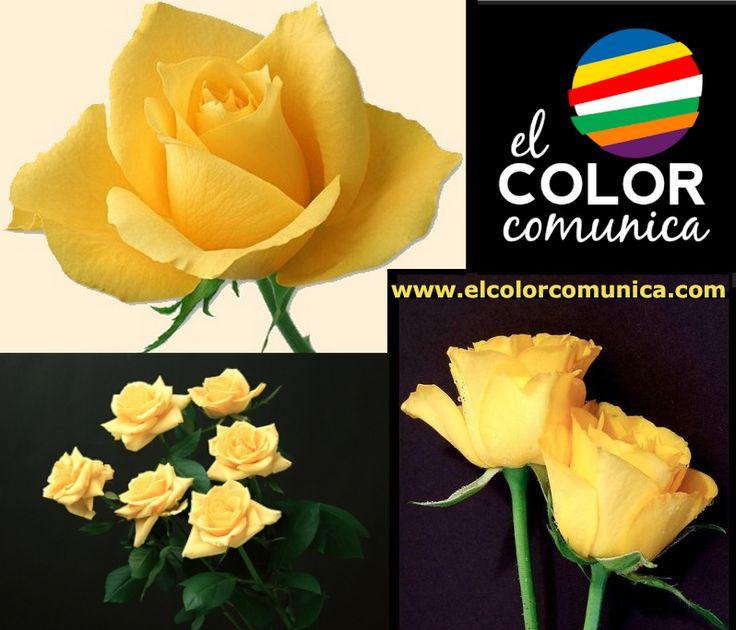 El Color Comunica: Lunes AMARILLO, según la sinestesia del color con los días de la semana. Conoce el significado de las ROSAS AMARILLAS. Por Patricia Gallardo http://www.elcolorcomunica.com/2013/04/significado-de-las-rosas-amarillas.html  https://www.facebook.com/elcolorcomunicafans