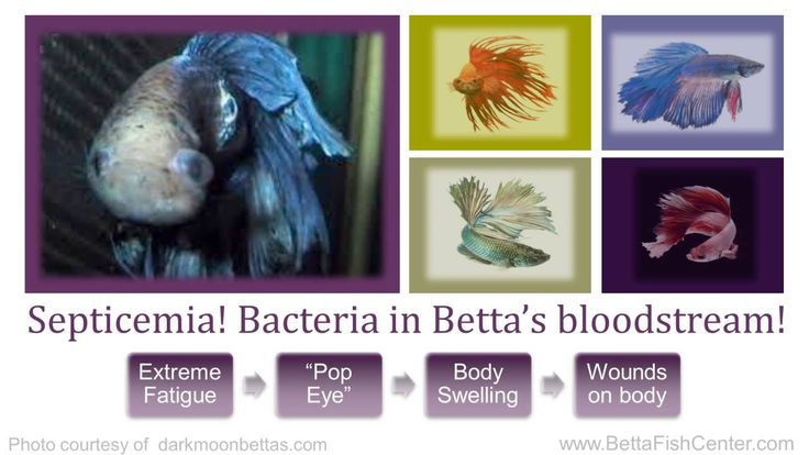 43 best images about fish tank maintenance on pinterest for Betta fish diseases