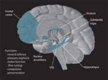 Ventral tegmental area - Wikipedia, the free encyclopedia Here's HOW we fall in love, get addicted, etc.
