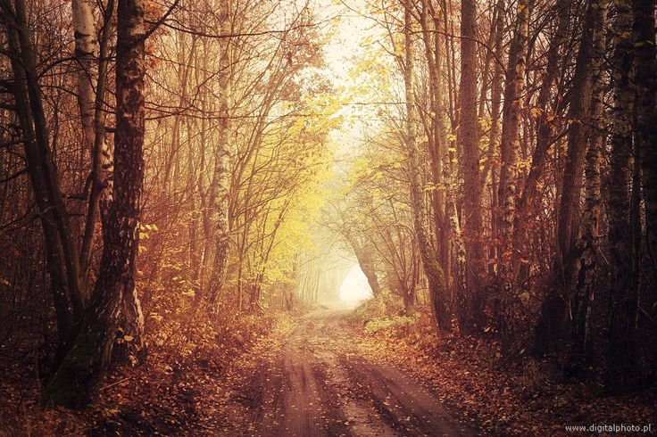 Fairy landscapes, road in the forest