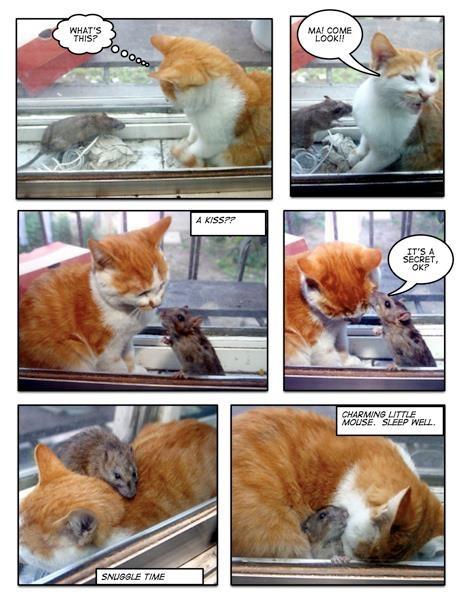 Smartscoop Basic Green Self Scooping Cat Litter Box