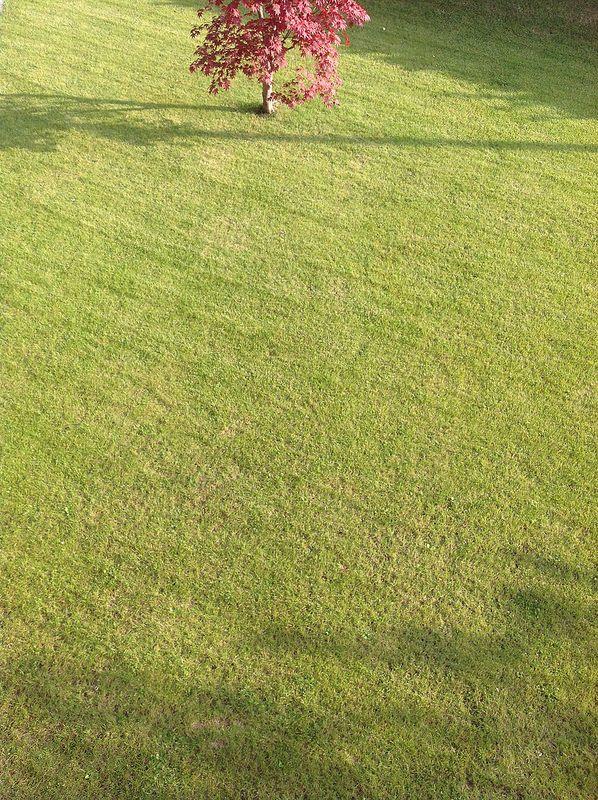 Autumn in my garden - with #liadesign www.liadesign.it #autumn #garden #grass