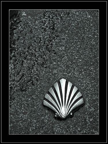 Scallop shell - Camino de Santiago